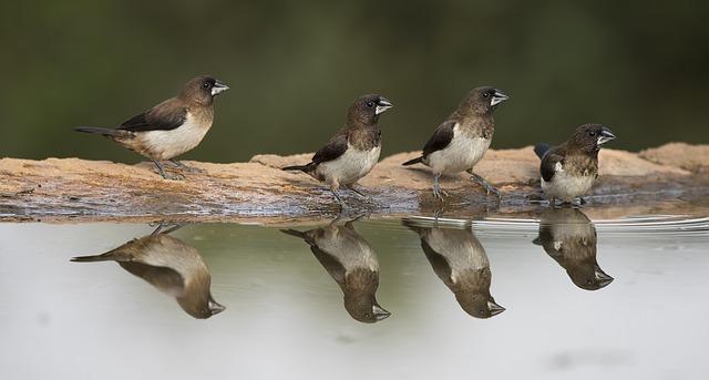 śpiew ptaków na dobranoc