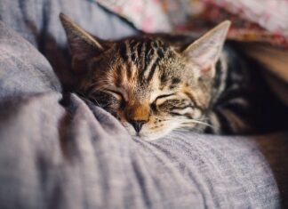 mruczenie kota do usypiania