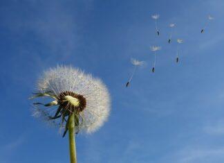 wiatr biały szum