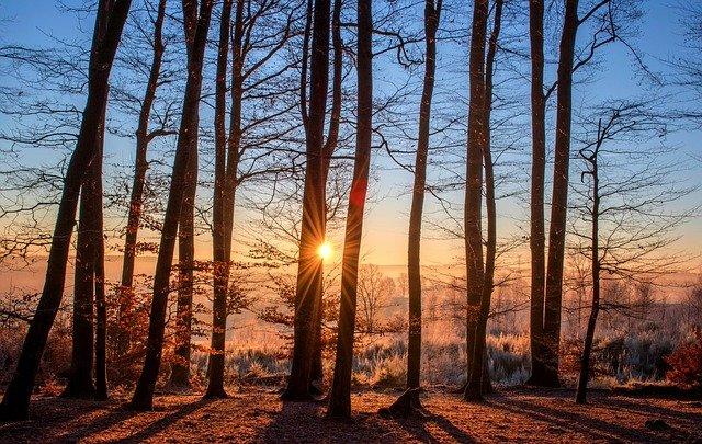 wyciszające nagrania szumu lasu
