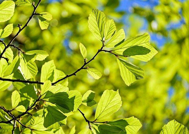 jak uspokaja szum liści