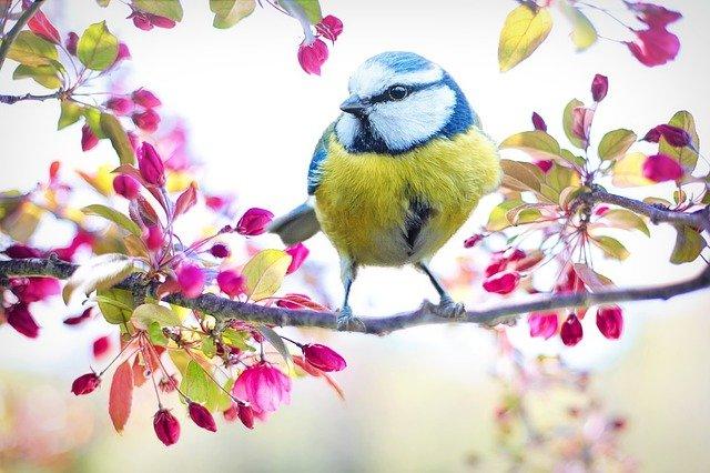 śpiew ptaków relaksujące odgłosy natury