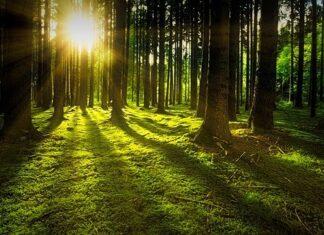 biały szum lasu do usypiania niemowląt