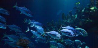 Szum filtra do akwarium do snu