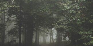 biały szum lasu nocą