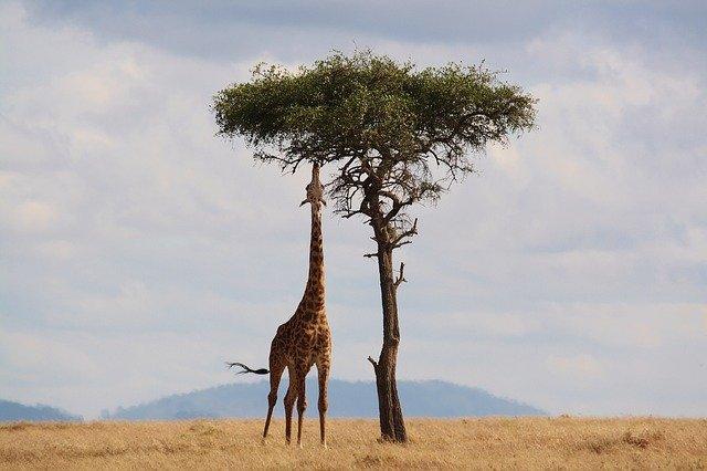 zalety zasypiania przy odgłosach afrykańskich zwierząt