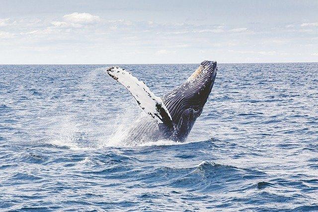 szum wieloryba dla dzieci