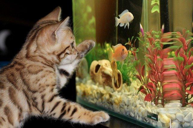 szum filtra w akwarium