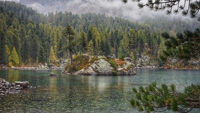 naturalne odgłosy deszczu w lesie
