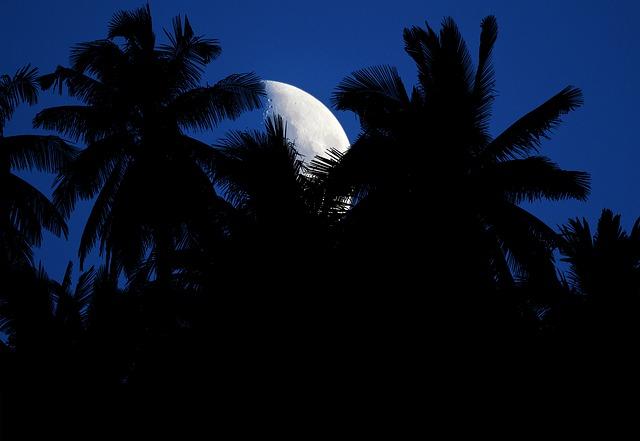 odgłosy tropikalnej nocy