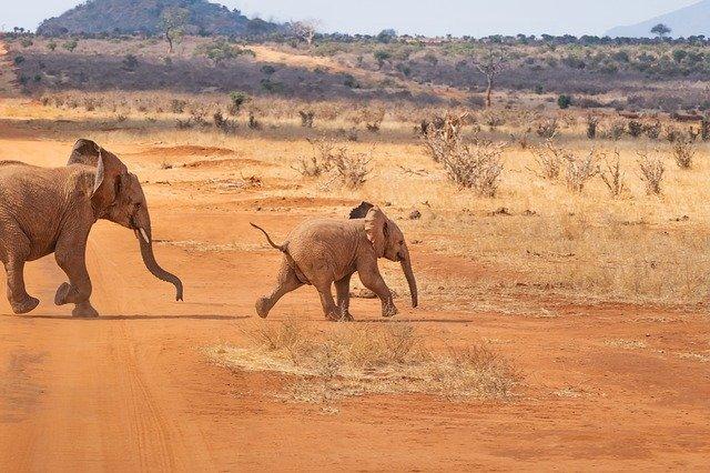 szum zwierząt z afryki