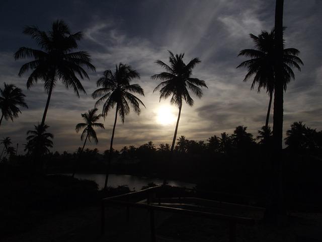 szum tropikalnej nocy do usypiania niemowląt
