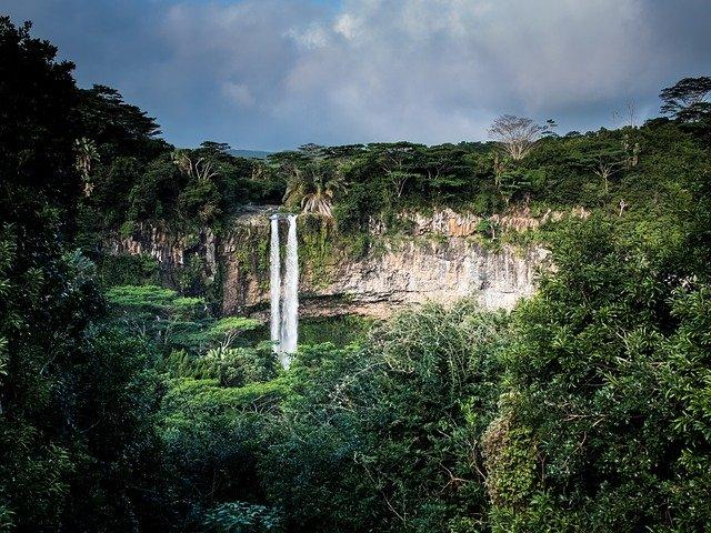 szum zwierząt w dżungli dla dzieci